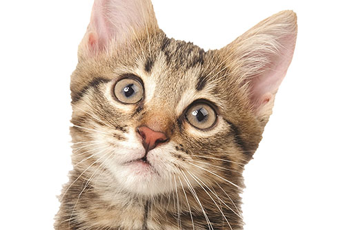 $85 Cat Vaccine Packages at Sharp Animal Hospital & Dental Care